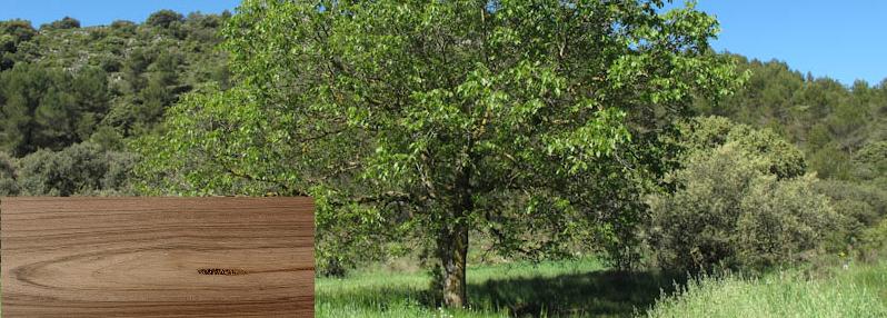 Por qué es más cara la madera de nogal?   Maderea