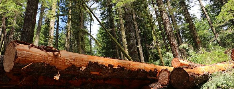 subasta madera
