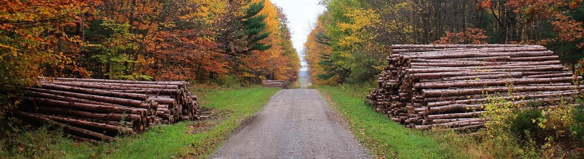 Datos Subastas aprovechamientos forestales madera