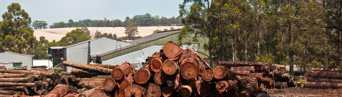 Usando madera se cuidan los montes