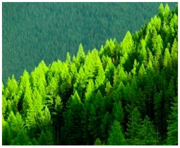 Bosque gestionado madera