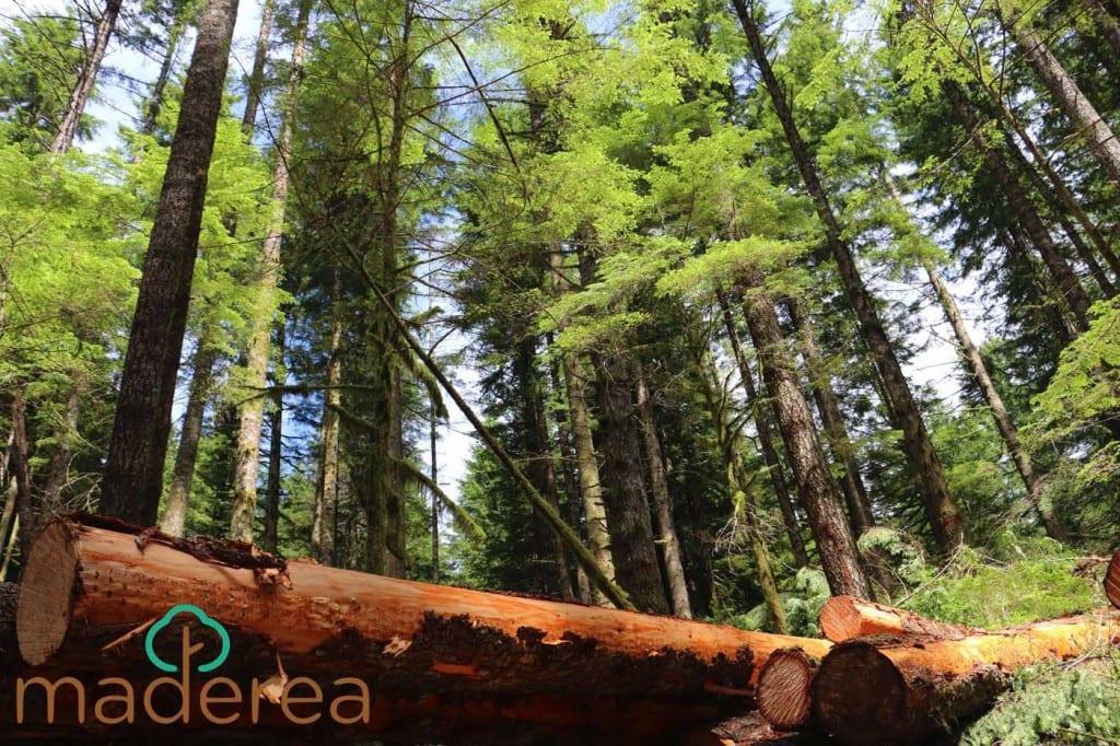 Subastas madera