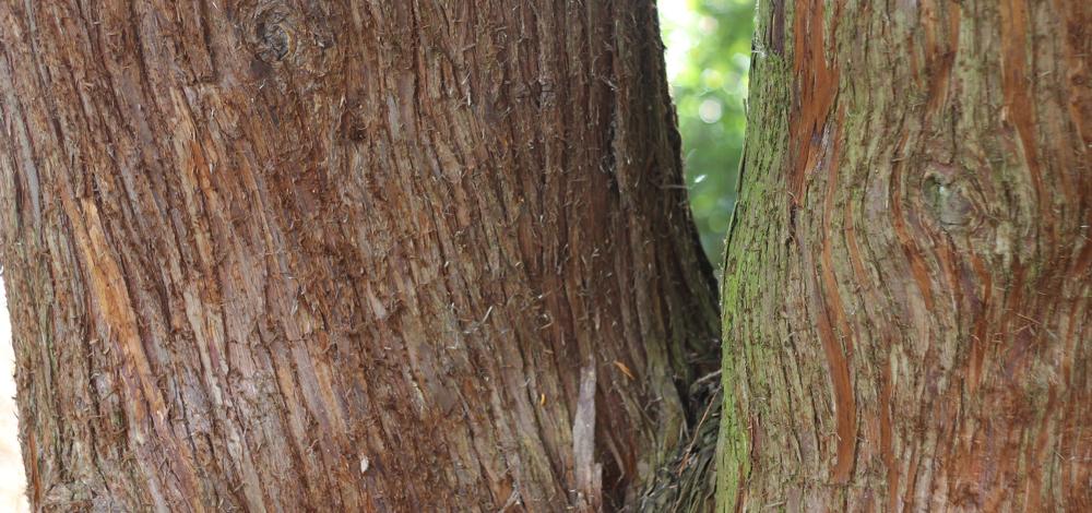 madera-y-monte-cambio-climatico