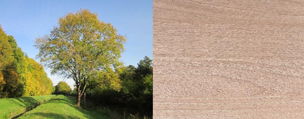 madera de fresnos, fresno, usos de la madera de fresno