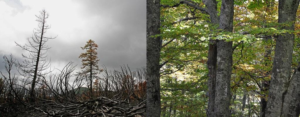 ordenación de montes, aprovechamientos forestales
