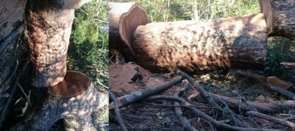 madera tropical de montes ordenados
