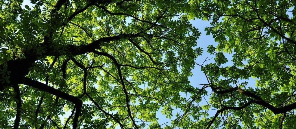 madera de frondosa