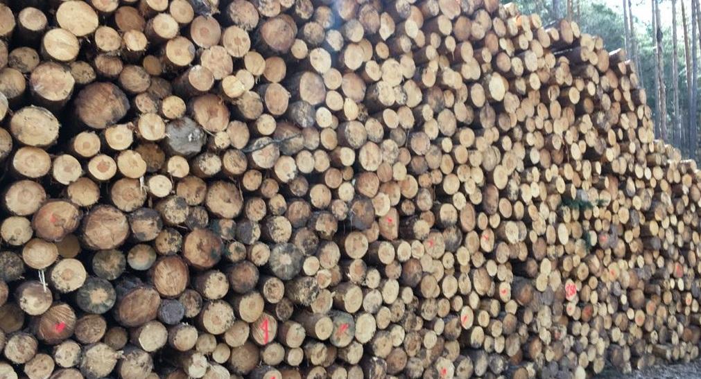 madera en rollo