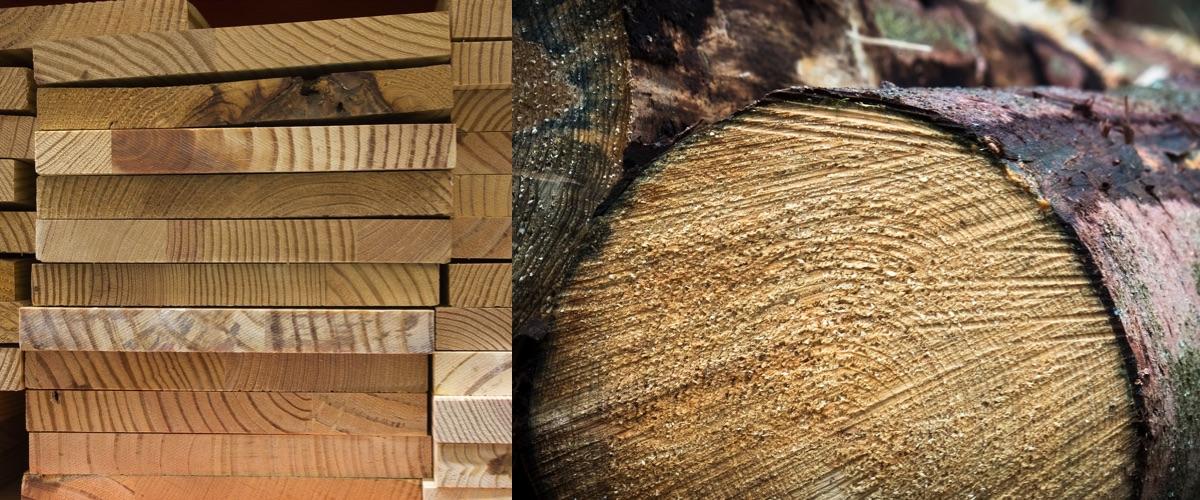 Características microscópicas madera