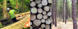 Aprovechamientos forestales